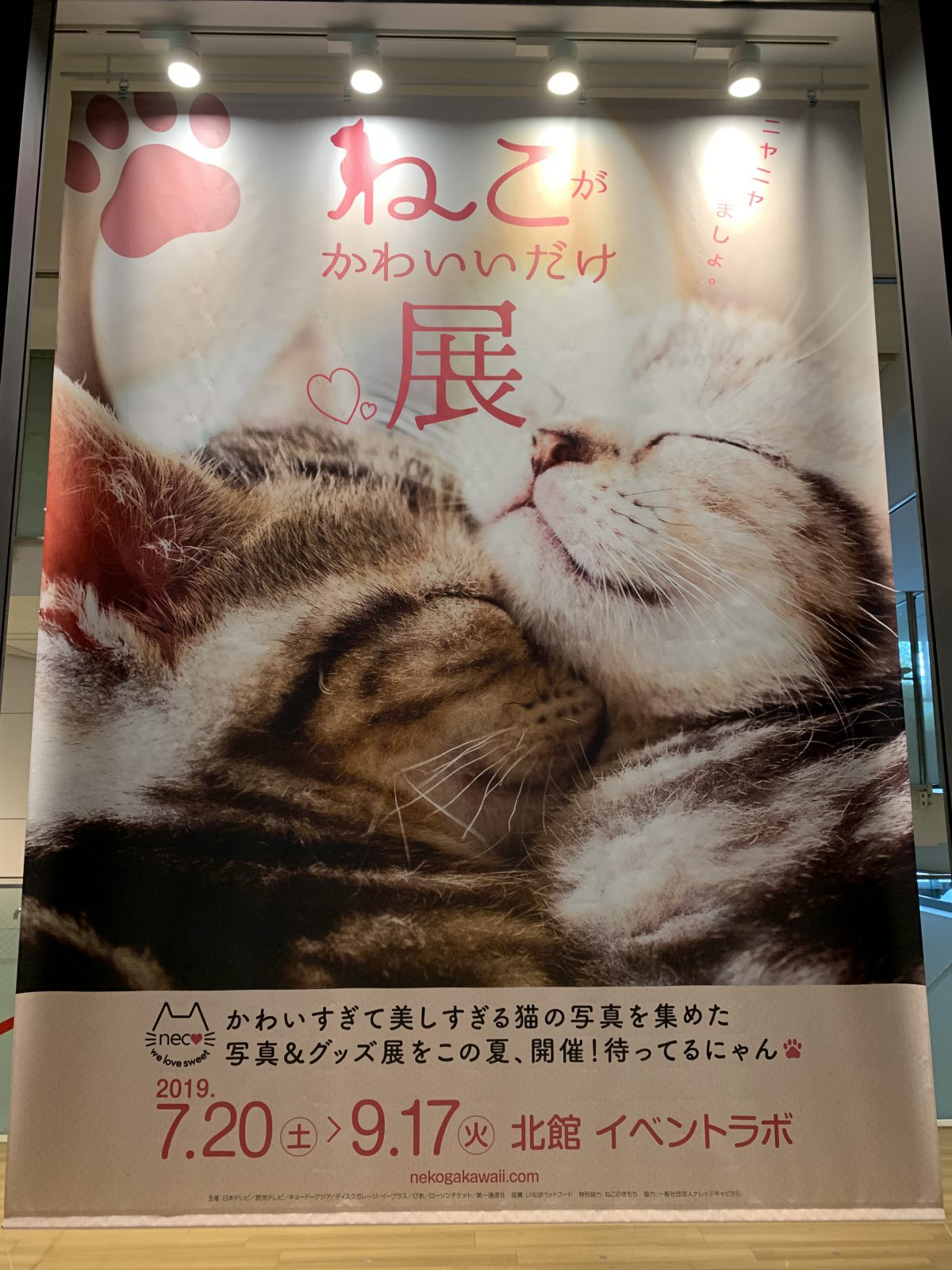 ねこ が かわいい だけ 展 大阪